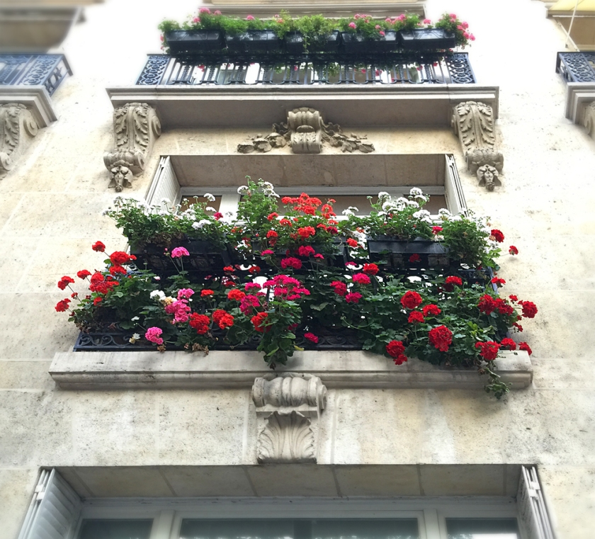Gorgeous geraniums in the Montparnasse neighborhood.
